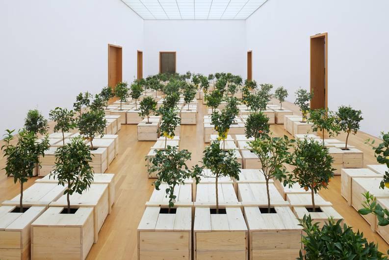 Zitronenbäume wachsen aus Holzsärgen