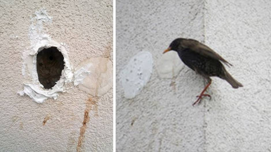 Leipzig: Krasser Fall von Tierquälerei – Vögel wurden eingemauert