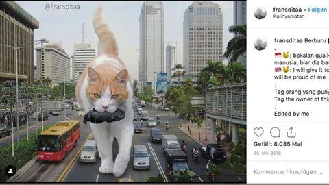 Auf der Fotomontage ist eine rot, weiß getigerte Katze auf einer großen Straße abgebildet. Sie trägt ein Auto im Maul
