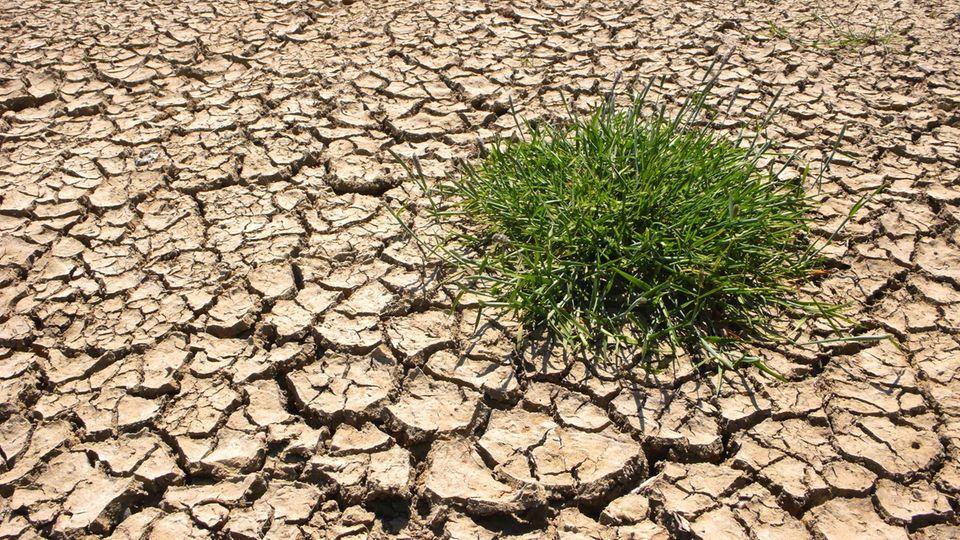 Der Klimawandel bereitet den Deutschen große Sorgen