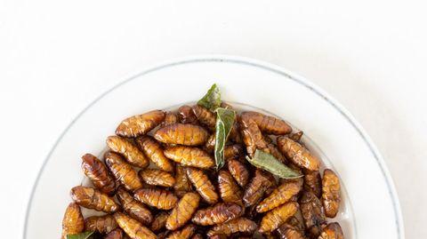 Niederlande erwarten Boom bei Insekten-Produktion