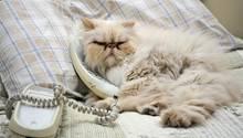 """Eine Katze """"telefoniert"""" und liegt mit Telefonhörer im Bett"""