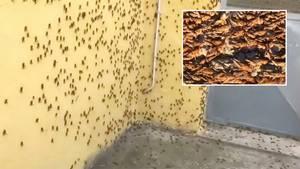 Heuschrecken-Plage auf Sardinien: Insekten fallen über Mittelmeerinsel her