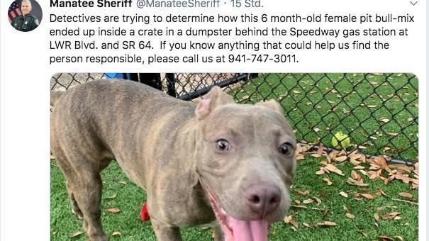 Screenshot vom Twitter-Account des Manatee Sheriff's Office. Sie posteten ein Bild von der braunen Hundedame