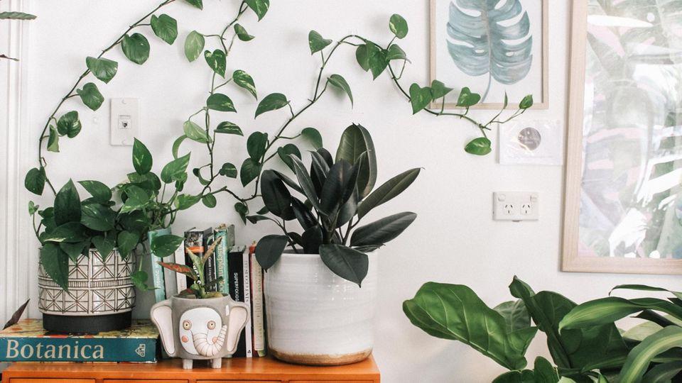 Pflanzen in schönen Übertöpfen sind ein echter Hingucker