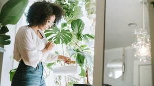 Urban Gardening: Mit diesen Ideen wird deine Wohnung zum urbanen Dschungel (Symbolbild)