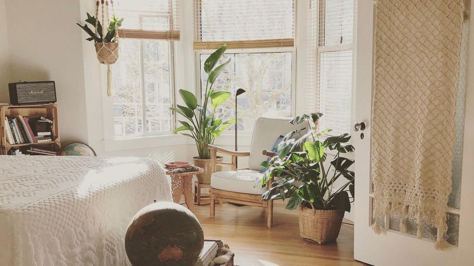 Große Zimmerpflanzen können ganze Zimmerecken grüner machen