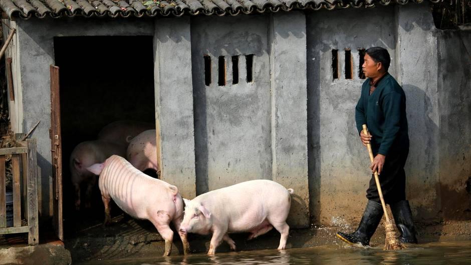 Schweinestall in China