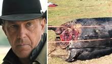 """TV-Serie """"Yellowstone"""" : Mit diesen schweren Vorwürfen hat sich ein Whistleblower an die Tierrechtsorganisation PETA gewandt."""