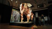 Vor dem Foto eines Elefanten steht ein plastinierter Elefant ohne Haut. Muskeln und Nerven sind zu sehen