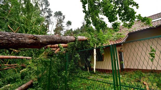 Eine vom Sturm entwurzelte Kiefer liegt auf dem Dach eines Hauses