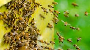 Ein Bienenschwarm sorgte in Mönchengladbach für einen Feuerwehreinsatz