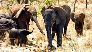 Elefanten in Mosambik