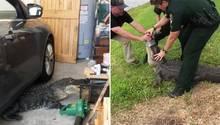 US-Cops wildern Alligator aus