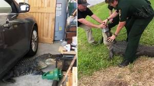 US-Cops wildern Alligator aus