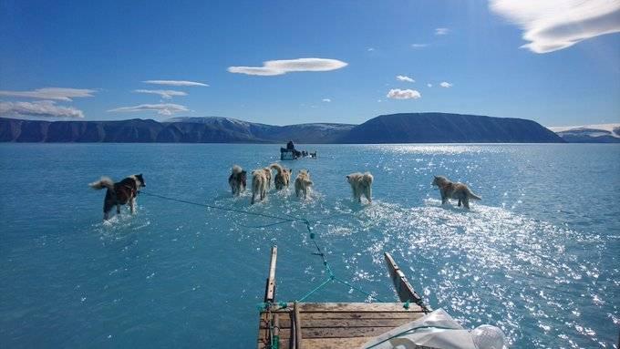 Grönland im Frühling: Schlittenhunde laufen scheinbar über Wasser
