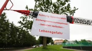 In Rottenacker hat die Feuerwehr mehrere Bäume abgesperrt, weil sie vom Eichenprozessionsspinner befallen sind