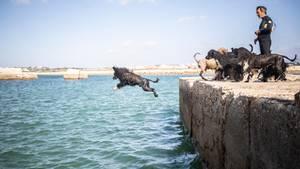 Ein Hund springt ins Meer