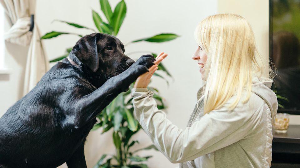 Thema Sehbehinderung: Ein schwarzer Labrador gibt einer Frau das Pfötchen