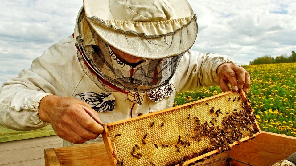 Ein Imker kontrolliert seine Bienen