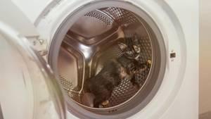 Ein kleines Kätzchen in der Waschmaschine