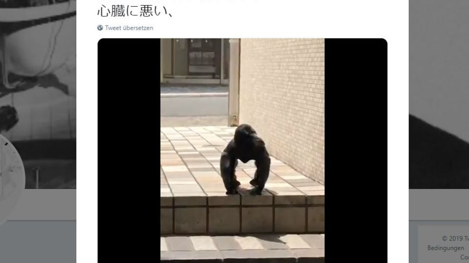 Ein Rabe sitzt auf einer Treppe