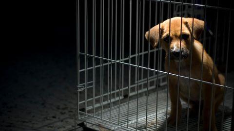 Die härteren Strafen sollen bei besonders schwerwiegenden Fällen von Tierquälerei verhängt werden (Symbolfoto)