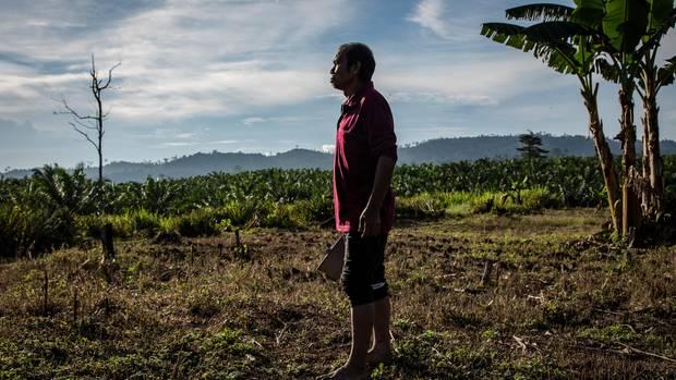 Täter: Dem Kleinbauern Nazir fraß Kaluhara II hier die Ananasernte von vier Monaten weg. Daraufhin ging Nazir auf Jagd