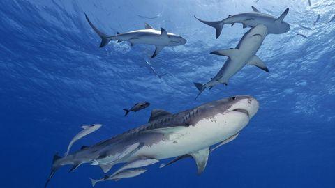 Jordan Lindsay war mit ihrer Familie im Urlaub auf den Bahamas, als sie von drei Haien beim Schnorcheln angegriffen wurde