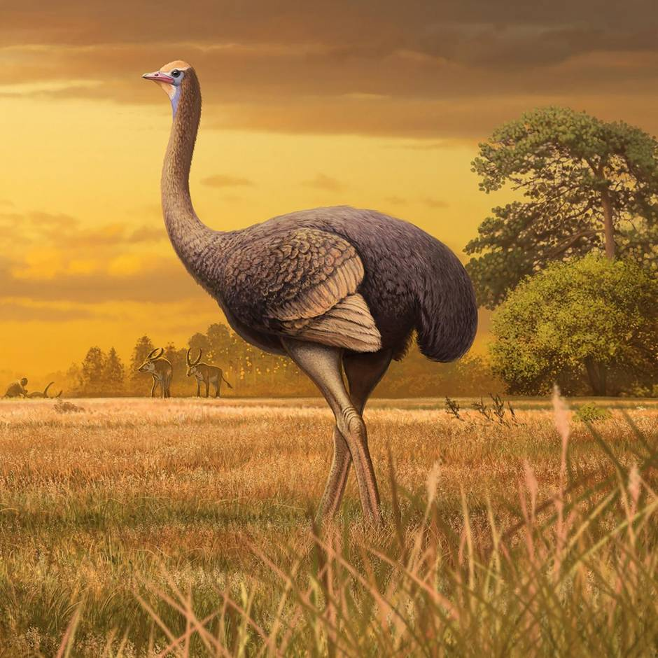 Halbinsel Krim: Dreimal so groß wie ein Strauß: Forscher entdecken Knochen eines riesigen Urvogels