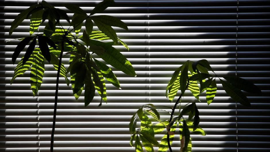 Urlaubszeit: So überleben Zimmer-Pflanzen ohne Gießen