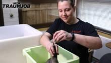 Zootierpflegerin Nina füttert Jimmy, das Humboldtpinguinküken