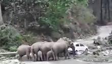 Die Elefantenherde bedroht das Auto im indischen Nationalpark Jim Corbett.