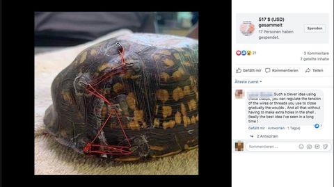 Der Panzer einer Schildkröte ist mit aufgeklebten Verschlüssen und einer roten Schnur fixiert