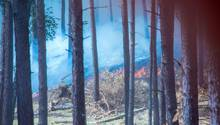 Dichter Rauch zieht durch den Wald in der Nähe der evakuierten Ortschaft Alt Jabel.