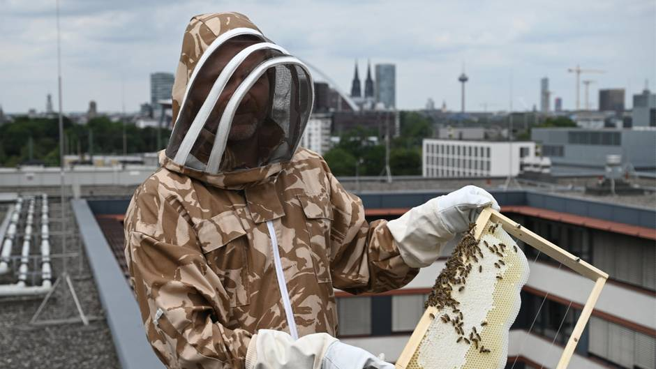 Der Polizist mit einer Bienenwabe