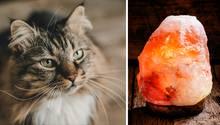 Vergiftungsgefahr: Katzen und Salzlampen