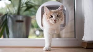 Eine helle kommt durch eine Katzenklappe von außen ins Haus