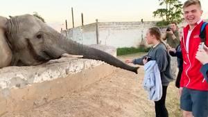 Sambia: Schülerin filmt Elefanten und kassiert heftigen Schlag