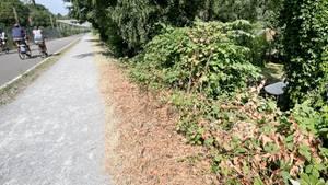 In der Nähe dieses Gebüsches in Mülheim an der Ruhr soll sich das Verbrechen zugetragen haben