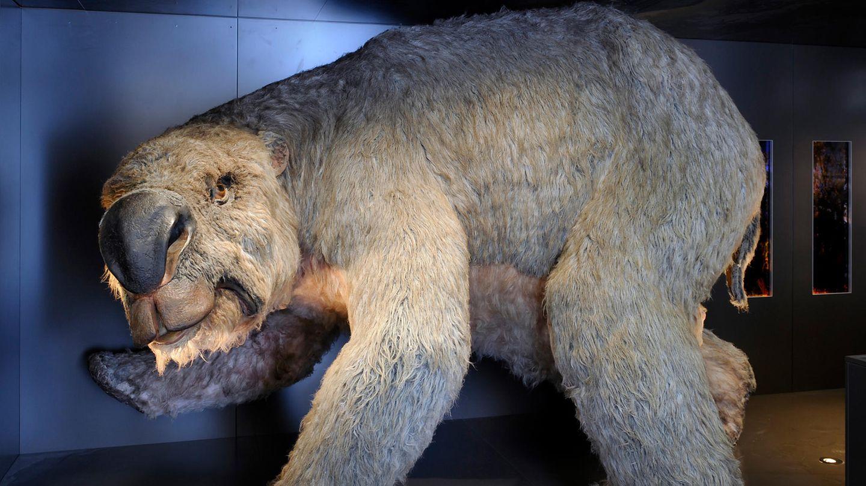 Ein Diprotodon, ein ausgestorbener Riesenwombat, steht im Australian Museum