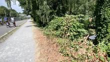In der Nähe dieses Gebüsches soll eine junge Frau von einer Gruppe Jugendlicher überfallen und sexuell missbraucht worden sein