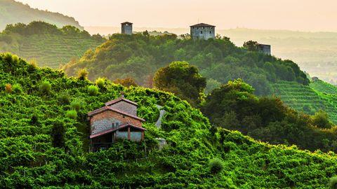 Die Hügel des Prosecco zwischen Vittorio Veneto und Valdobbiadene, Italien