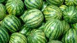 Tipp 1: Suchen Sie eine gleichmäßig geformte Wassermelone aus.  Achten Sie darauf, dass die Frucht nicht verbeult oder unregelmäßig in ihrer Form ist. Die Wassermelone sollte fest sein und keine weichen oder eingedrückten Stellen haben.