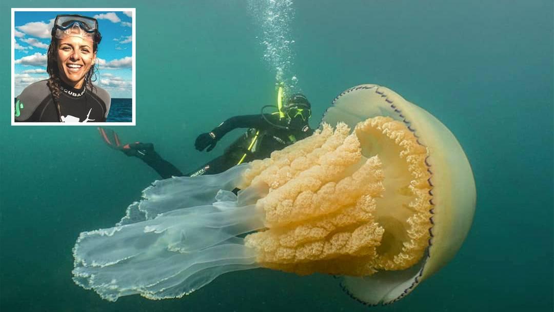 Gewaltiges Nesseltier: Unglaubliches Video: Taucherin schwimmt mit menschengroßer Riesenqualle