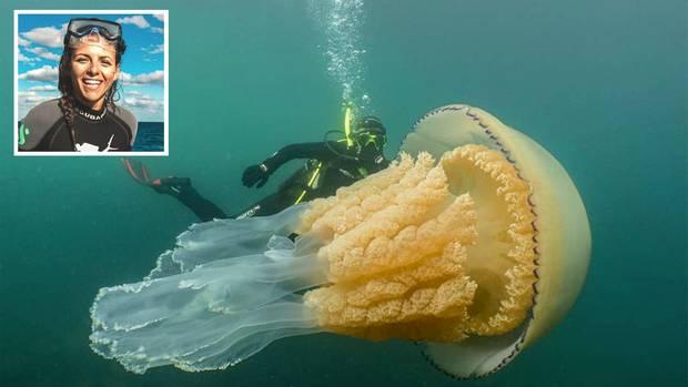 Ärmelkanal: Taucherin Lizzie Daly schwimmt mit Riesen-Qualle