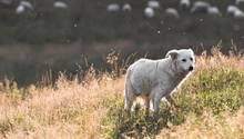 Ein treuer Hund rührt derzeit viele Griechen