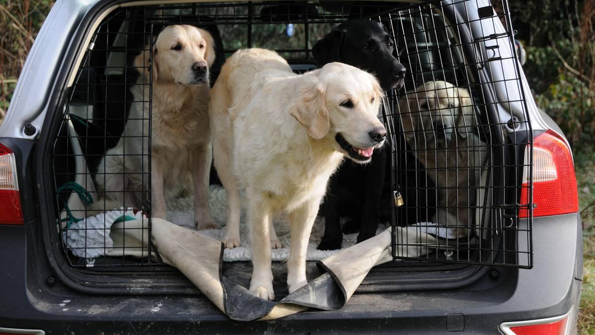 Hunde im Auto transportieren: Das müssen Fahrzeughalter beachten