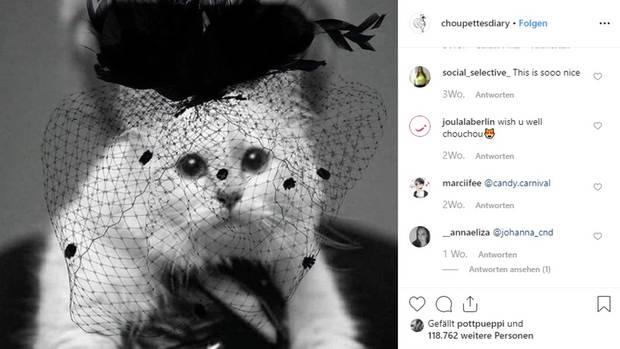Von Karl Lagerfelds Katze Choupette hat man lange nichts mehr gesehen