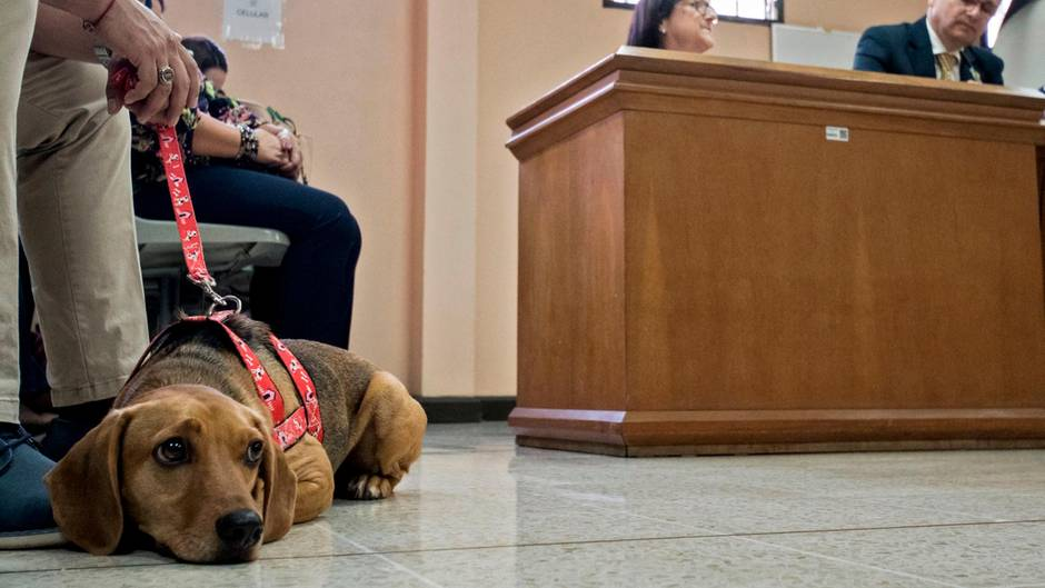 Campeon im Gerichtssaal, wo der Fall seiner Misshandlung verhandelt wurde